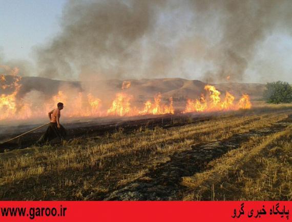 آتشسوزی در مزارع گندم شهرستان نهاوند+ تصاویر