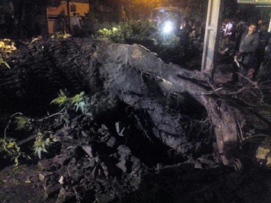 سقوط درخت و آبگرفتگی معابر در نهاوند + تصاویر